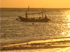 釣り(ローカルボート釣り)